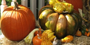 Version Originale Happy Thanksgiving pumpkin mix